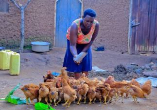 What do Chickens have to do with Microfinance?